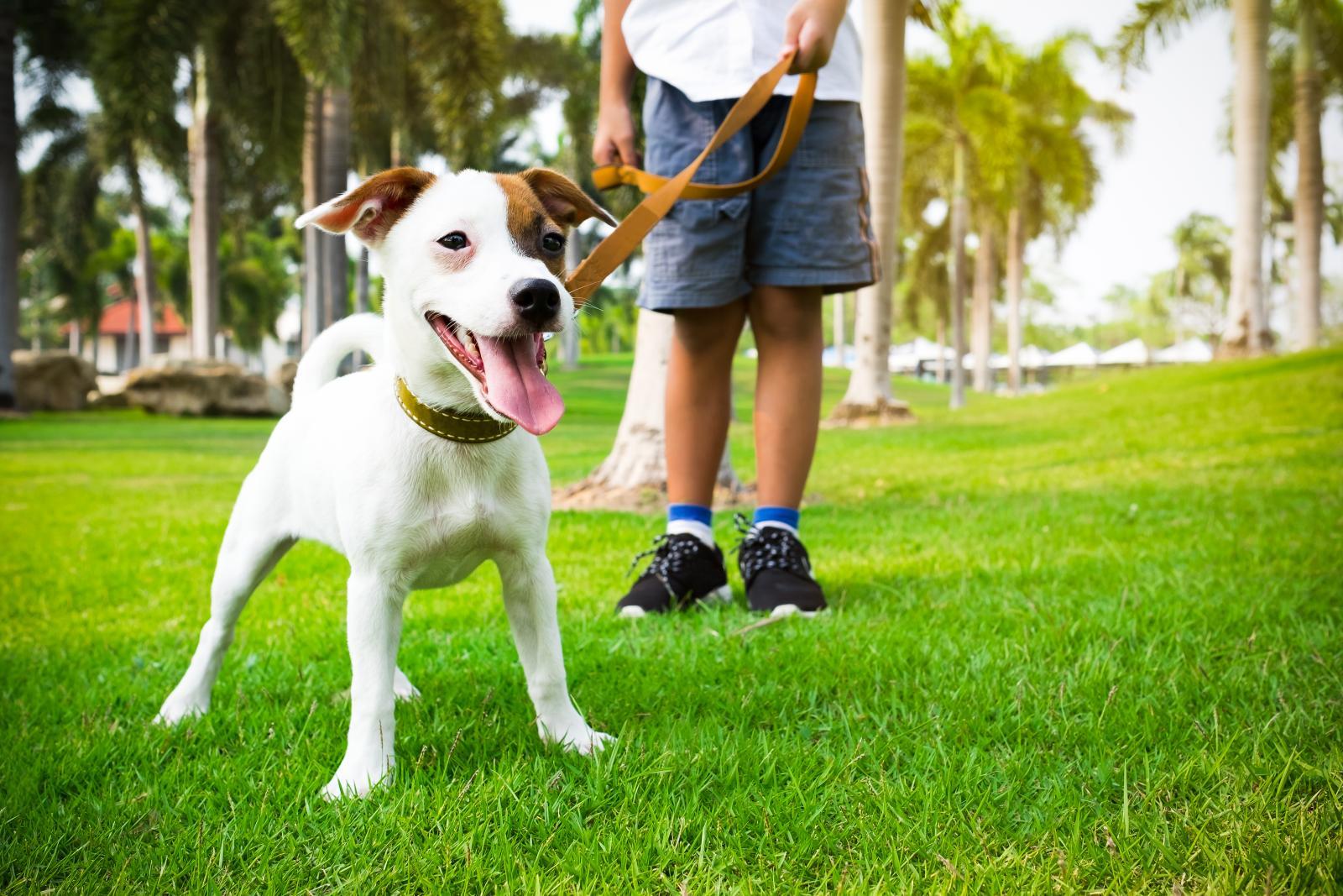 chien promenade sport