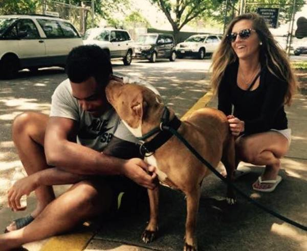 chienne pitbull adoption