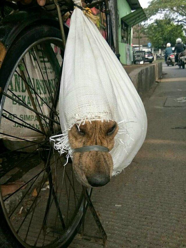 chien enfermé sac