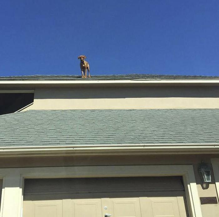 chien sur le toit