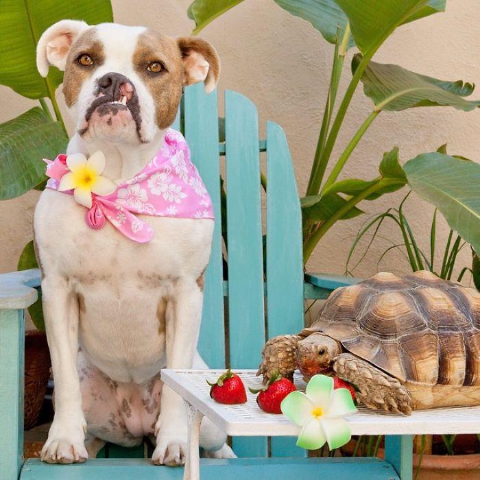 chien tortue gouter