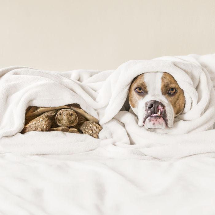 chien lit tortue