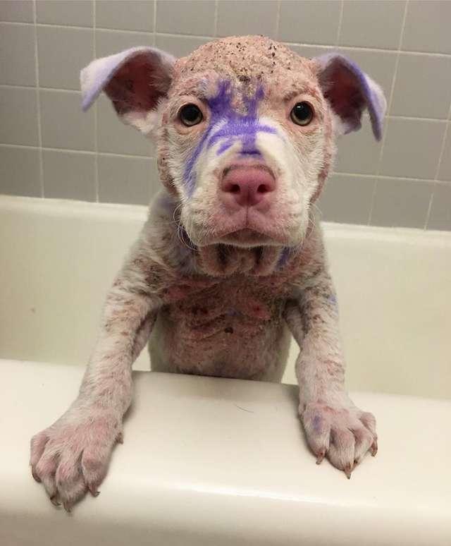 chien violet