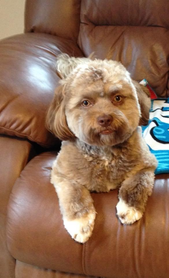 yogi chien visage humain
