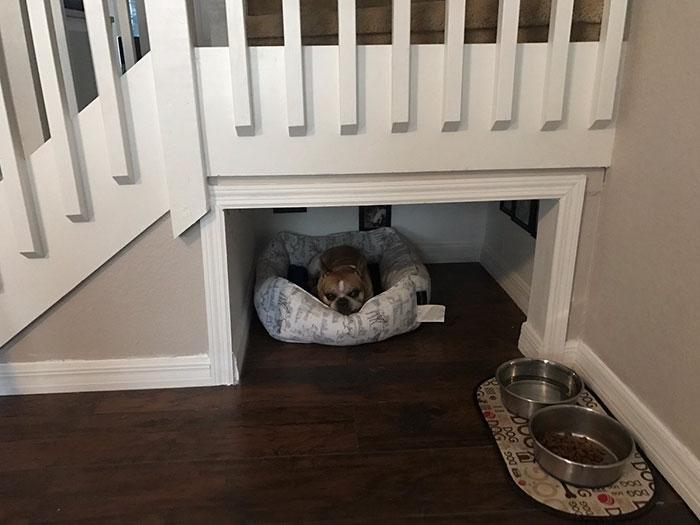 il construit une chambre sous les escaliers pour son chien insolite wamiz. Black Bedroom Furniture Sets. Home Design Ideas