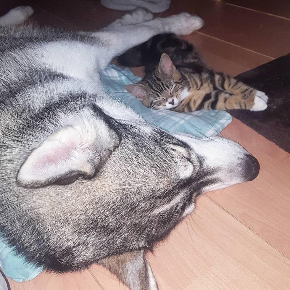 chien dort avec chat