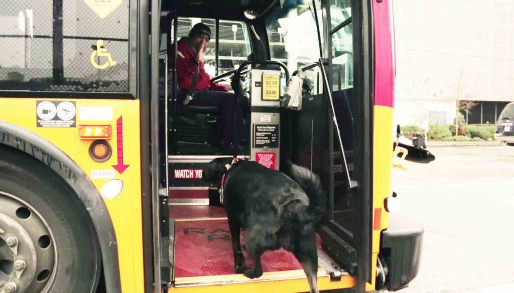 chienne bus