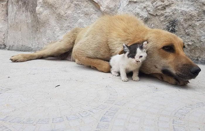 chienne chaton