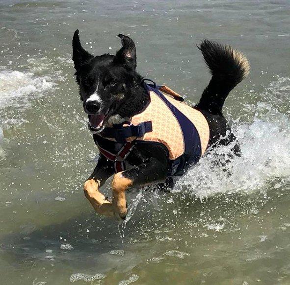 chienne dans l'eau