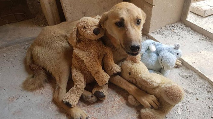 chienne ours peluche