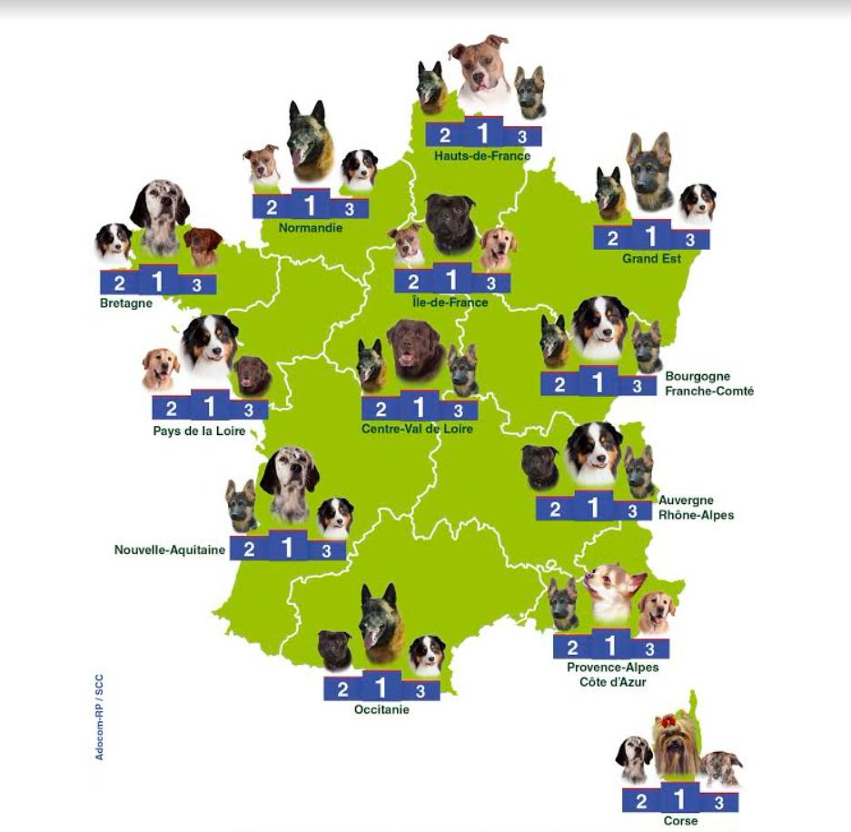chiens préférés régions france 2017