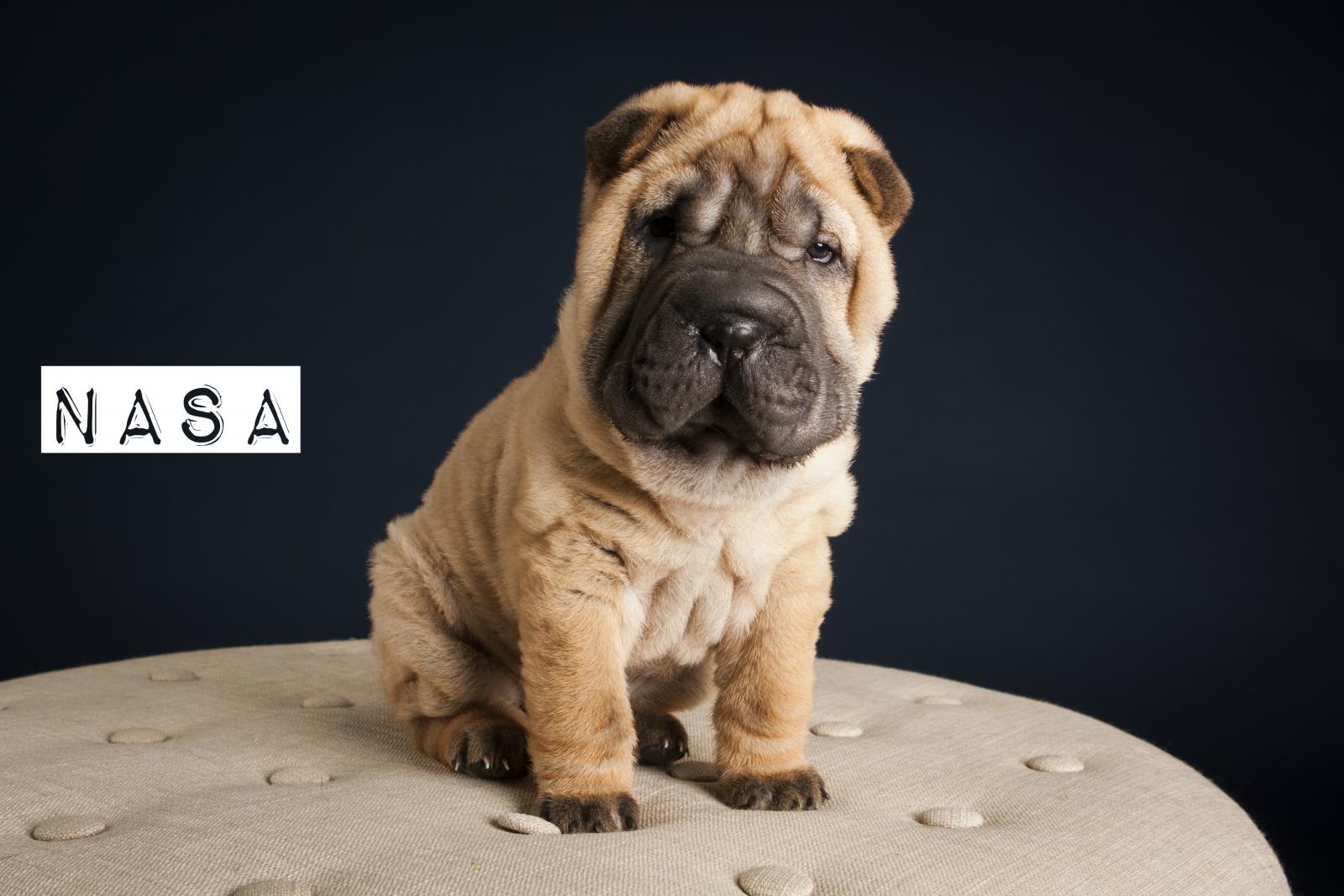 top 10 des noms originaux de chiens femelles en n pour 2017 choisir son chien wamiz. Black Bedroom Furniture Sets. Home Design Ideas