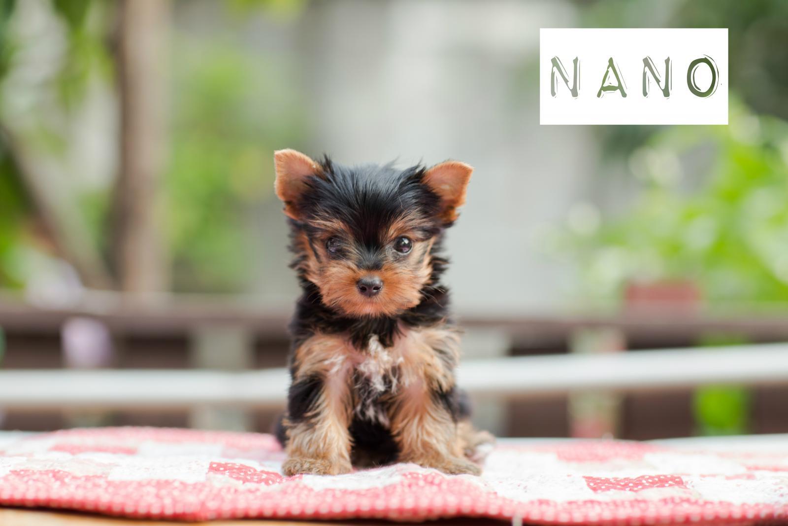 prénom chien N 2017