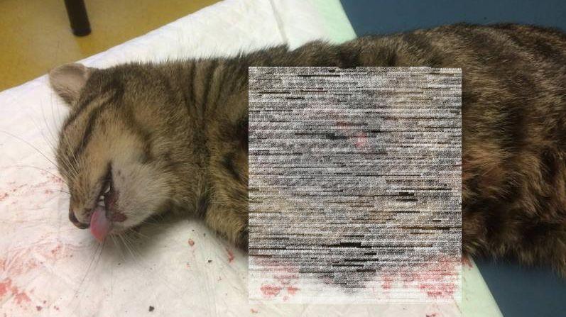 chat torturé colmar