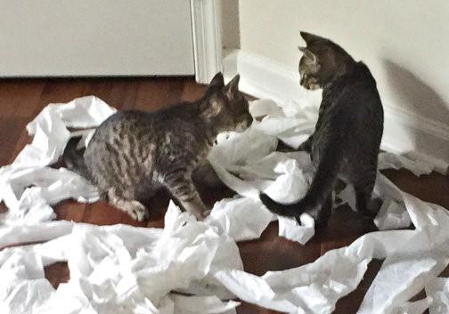 chatons papier toilette