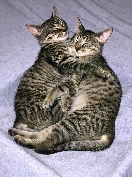 chatons dorment ensemble