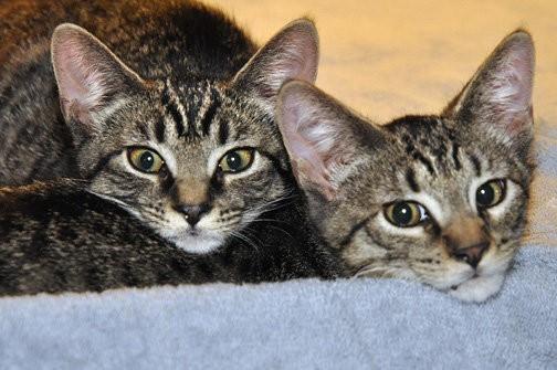 chaton frère et soeur