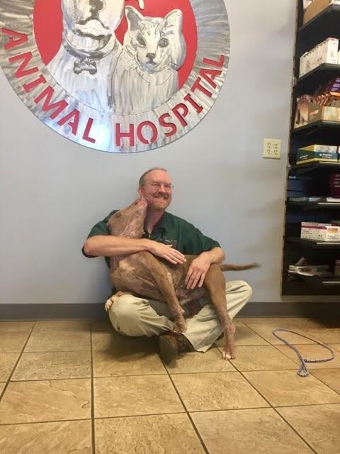 chien euthanasie
