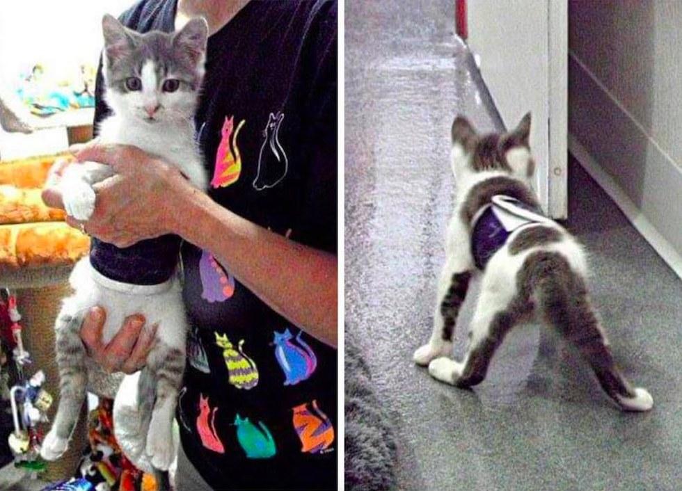 Derecho chat handicapé à son arrivée