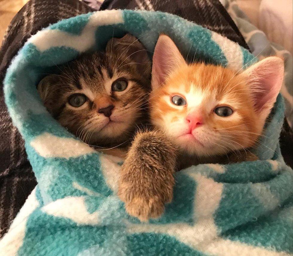 chatons câlins