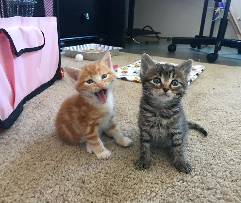 chatons trop choux