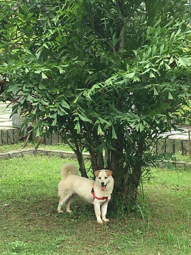 chien sauvé chine