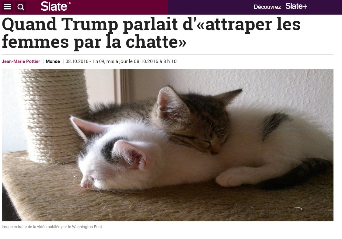 Donald Trum femmes chatte make america kittens again