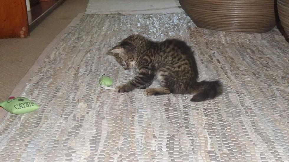 chaton sauvé sud afrique