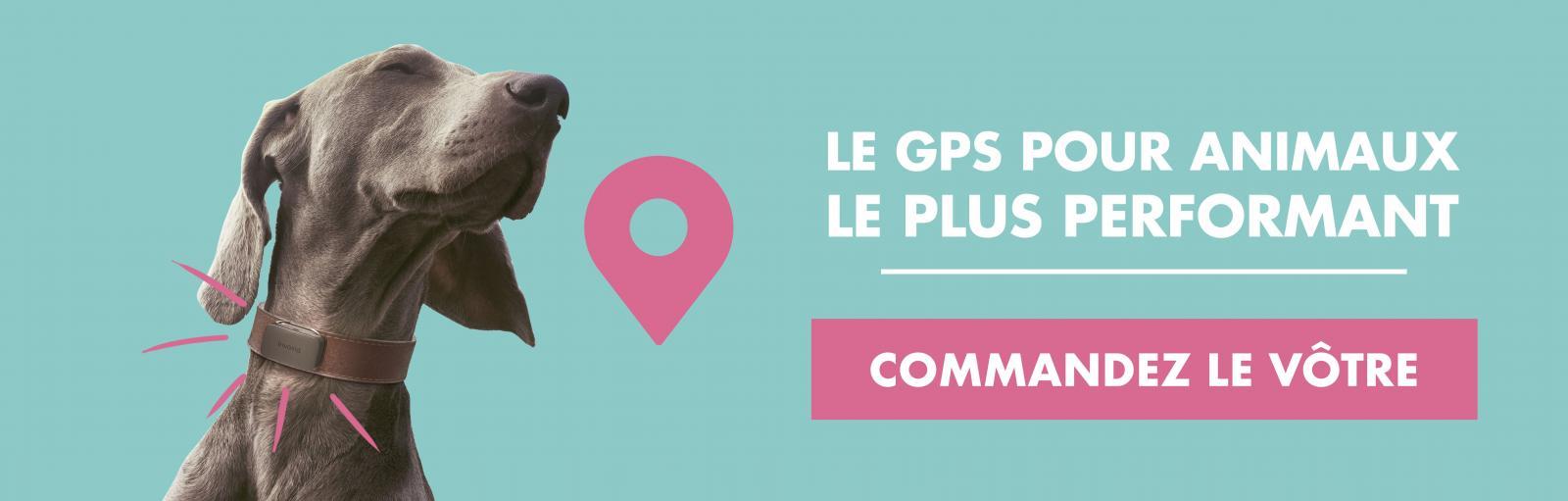wamiz x invoxia GPS
