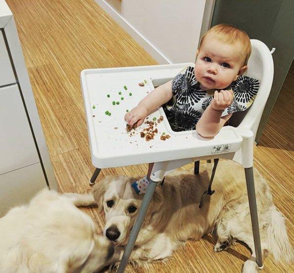 chien chaise haute bébé