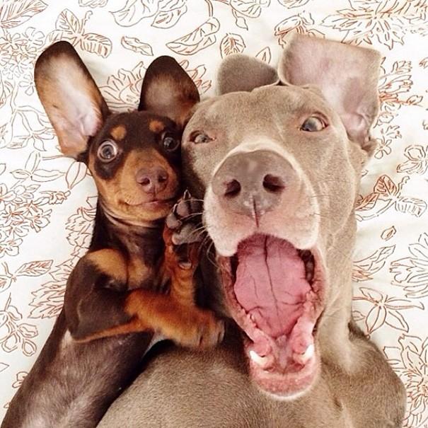 chiens selfie