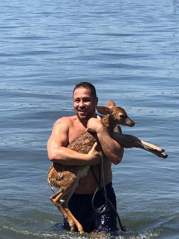 faon sauvé chien