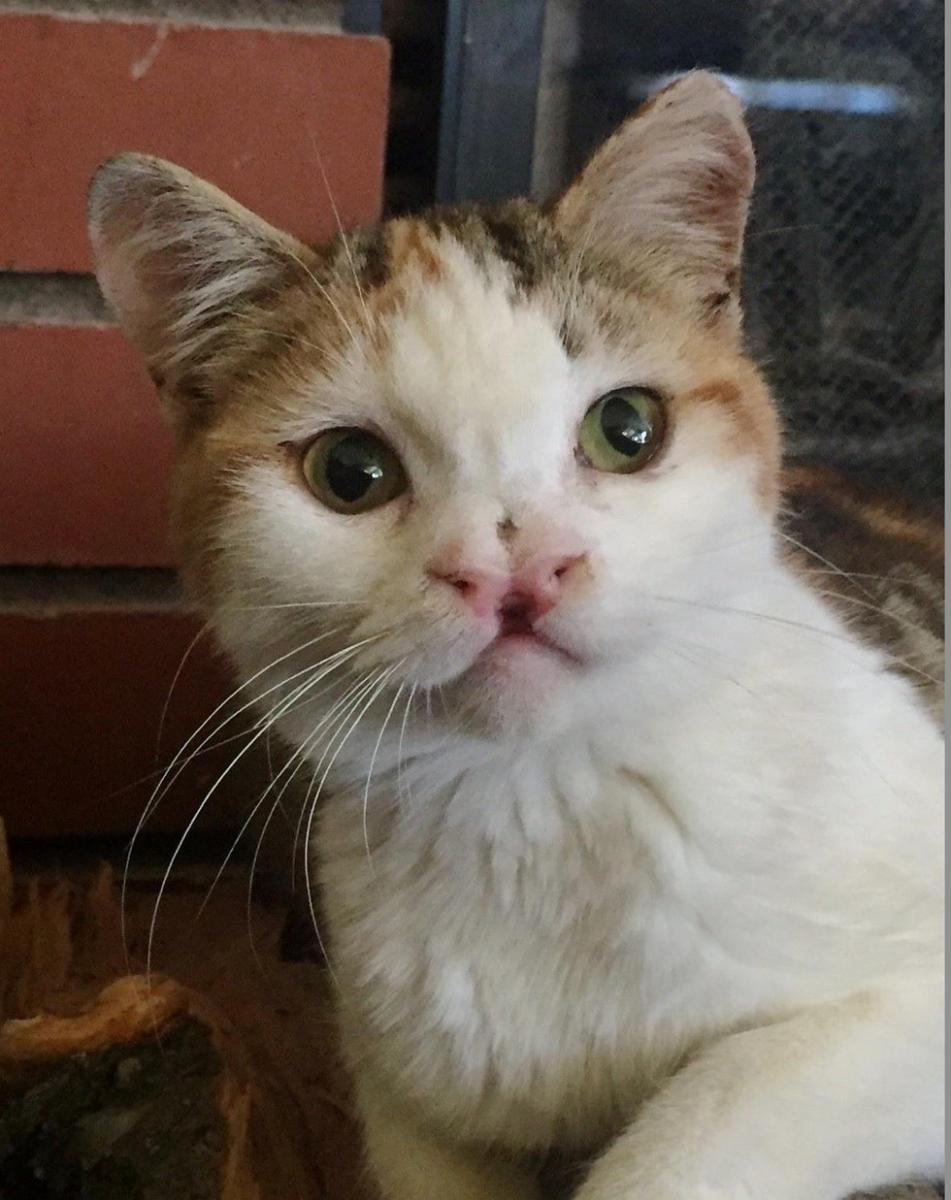 fennel chatte handicapée milo's sanctuary