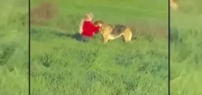 fillette chienne en fuite