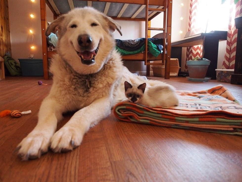 chatons et malamute