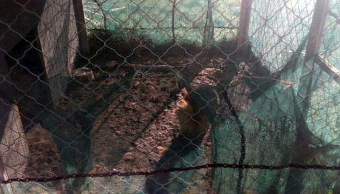 Cage où vivaient les Spitz