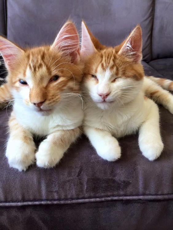 chatons aveugles