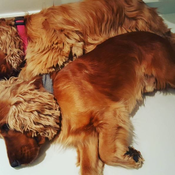 frederic koh lanta chiens
