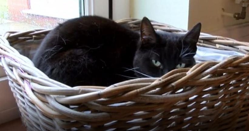 chatte noire panier