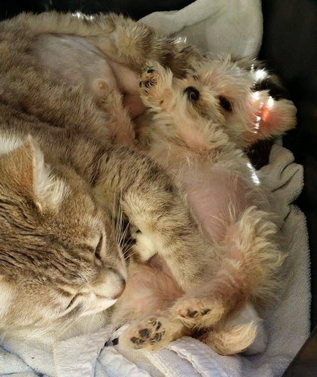 chatte et chiot adoption