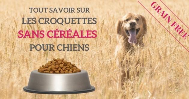 Croquettes sans céréales : bonne ou mauvaise idée pour nourrir son chien ?