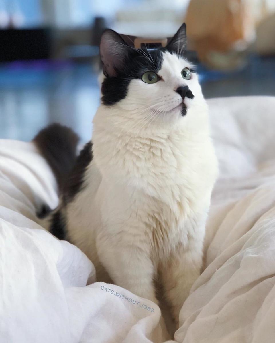 chatte blanche et noire