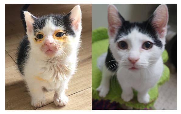chaton avant après