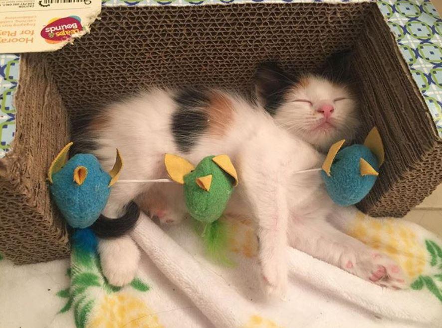 gretchen cat rescue