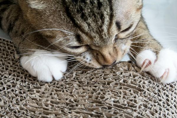Comment fabriquer facilement un griffoir indestructible pour son chat ?