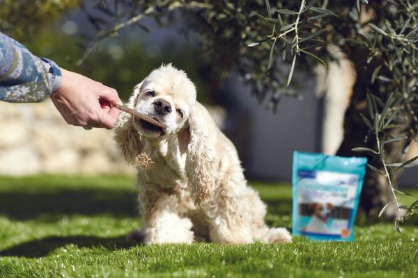 L'halitose : comment lutter contre la mauvaise haleine de votre chien ?