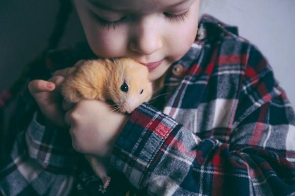 Réussir l'adoption du hamster : apprendre à l'apprivoiser et à le manipuler