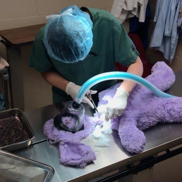 peluche opération