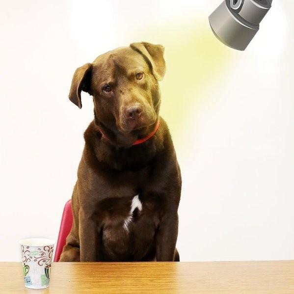 chien interrogatoire