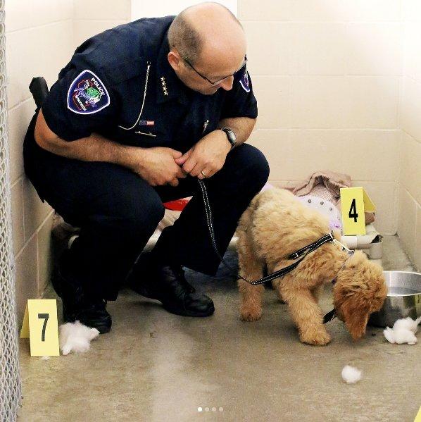 chien policier enquête